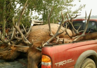 Elk in back of truck