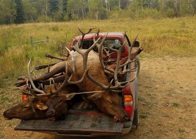 Elk in back of truck in a meadow