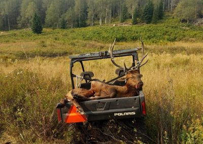 Elk in the back of Polaris on Wolf Mountain Ranch